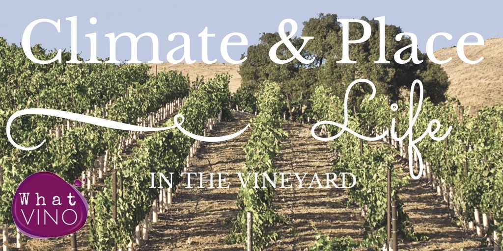 Life in the Vineyard: Climate and Place in What VINO Learning About Wine