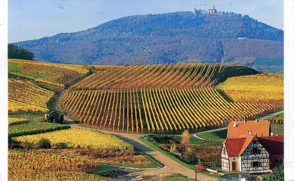 france-alsace-vinyards in What VINO Wine Regions